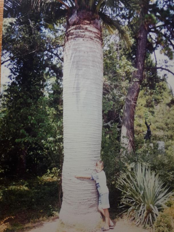 okolo-baobaba-v-Sochi