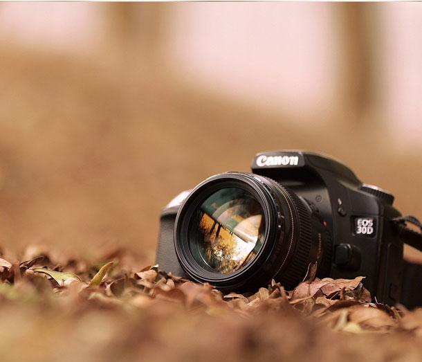 фотоаппарат на листьях в парке