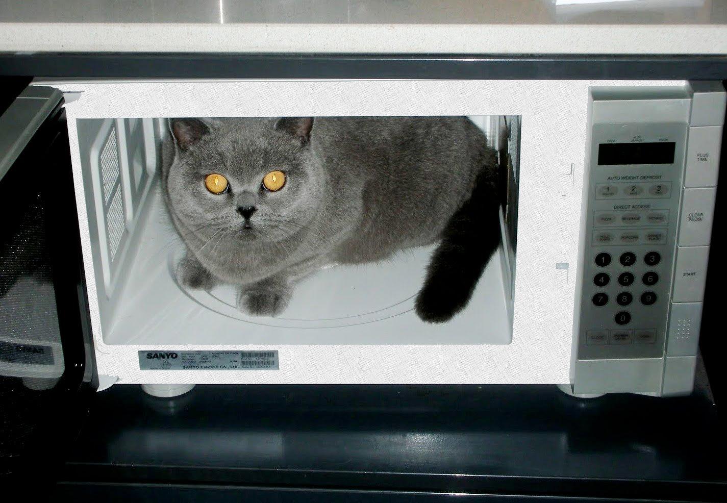 нельзя кошку ставить в свч