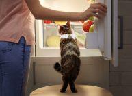 открытый холодильник с продуктами и котом