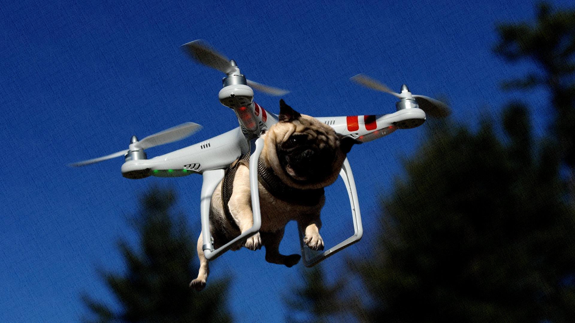 летающая собака на самом деле летает на квадрокоптере